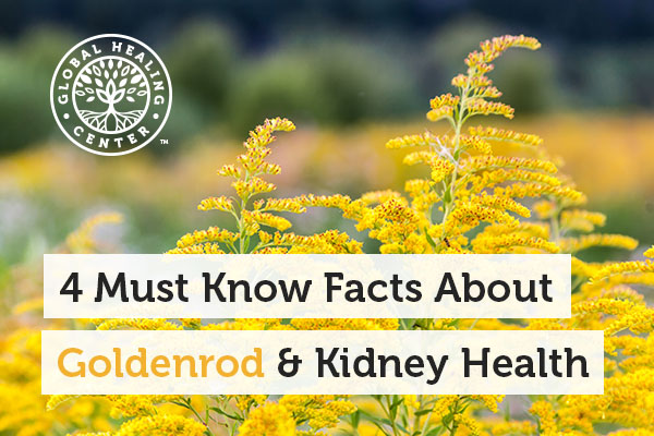 Goldenrod can help flush the system.