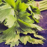 10 Benefits of Organic Lovage