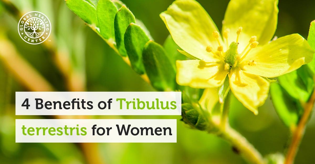 Tribulus Terrestris Studie
