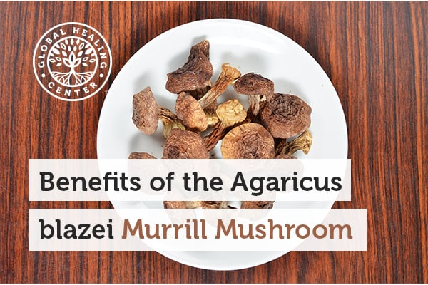Agaricus blazei murrill mushroom helps support the immune system.