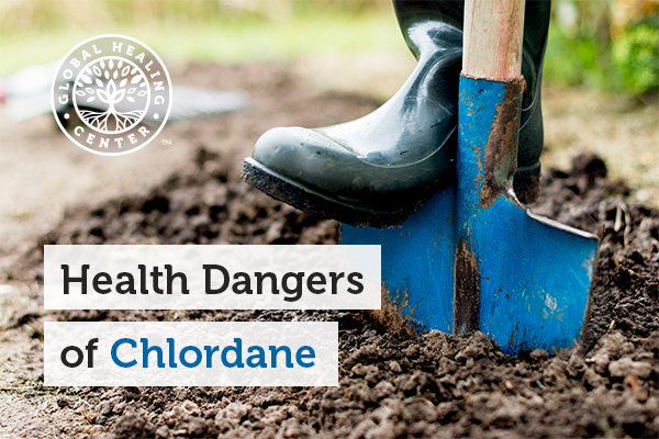 A person is digging. Chlordane can affect the digestive and nervous system.