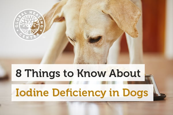 Iodine deficiency in dogs can lead to hypothyroidism and other health concerns.