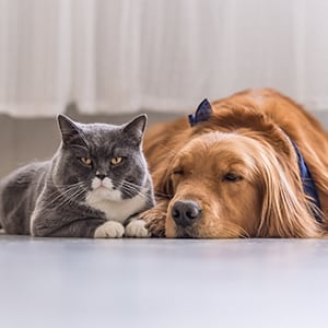 How Pet Dander Impacts Lung and Sinus Health