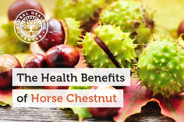 Horse Chestnut contains powerful antioxidants which can help fight free radicals.