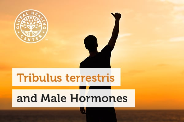 Tribulus Terrestris has been applied as a remedy for male hormones and reproductive difficulties.