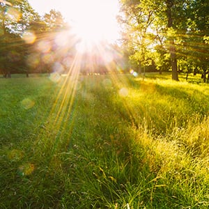 Vitamin D: The Benefits of the Sunshine Vitamin