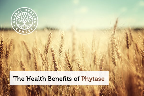 Phytase is commonly found in plant based foods.