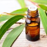 Eucalyptus Oil: Top Benefits & Uses With DIY Recipes