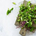 Holy Basil: Top 12 Amazing Health Benefits of Tulsi