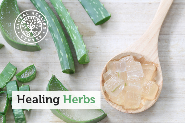 A picture of aloe vera cut into pieces. Aloe vera is a powerful healing herb.