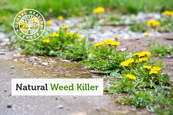 A sidewalk overrun with weeds ready for a natural weed killer.