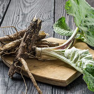 Burdock Root Benefits: How Can You Use This Powerful Plant?