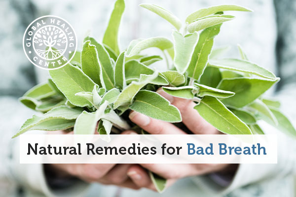 A woman holding sage leaves. Safe is a natural remedy for bad breath.