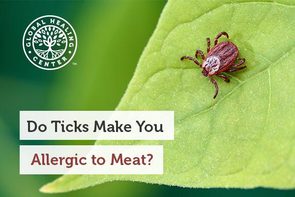 A tick on a leaf.