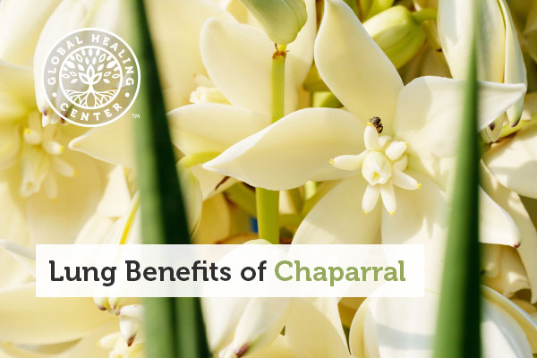 Several chaparral plants.