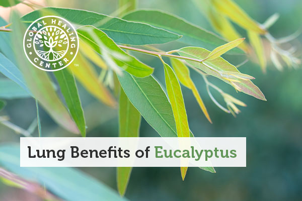 A eucalyptus plant.