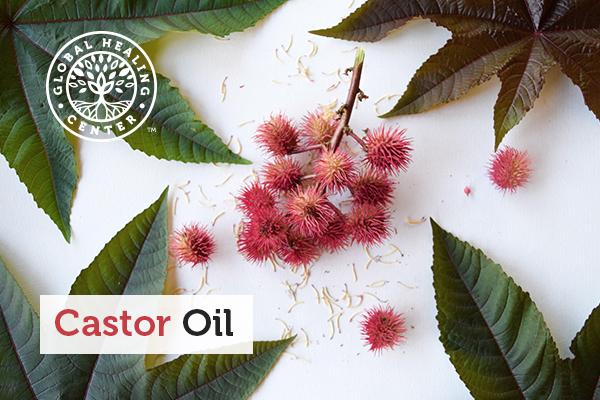 The castor oil plant Ricinus communis.