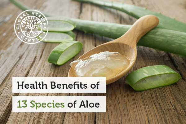There are many different kinds of aloe plants available.