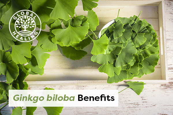 Ginkgo biloba leaves over a wooden background.